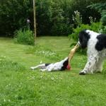 Niké bojuje o slepici, ale zatím má Hubert navrch