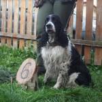 Hubert - všestranný pes
