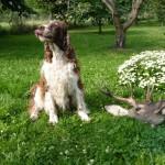 Heruša s jelenem