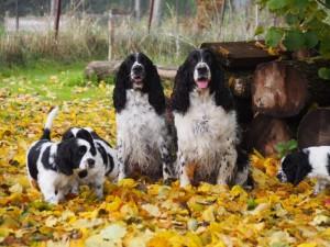 Niké, Hubert a štěnda
