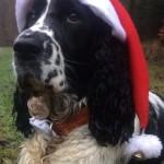 Berenika nám poslala Vánoční pozdravy :-)