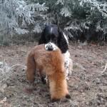 Hubert s liškou
