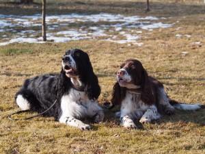 Hubert a Adana